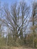 Augustowo cmenatrz ewangelicki (Augustendorf kreis Flatow)